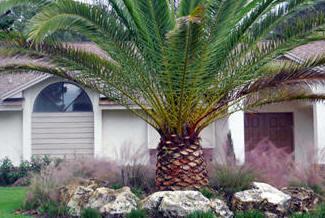 Florida Fieldstone | Rockscape™ Landscape Boulders | Orlando, Miami