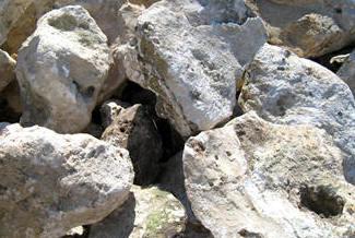 florida fieldstone rockscape landscape boulders orlando miami