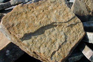 Tennessee fieldstone rockscape landscape boulders for Landscaping rocks daytona beach